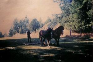horse plowing crane island farm
